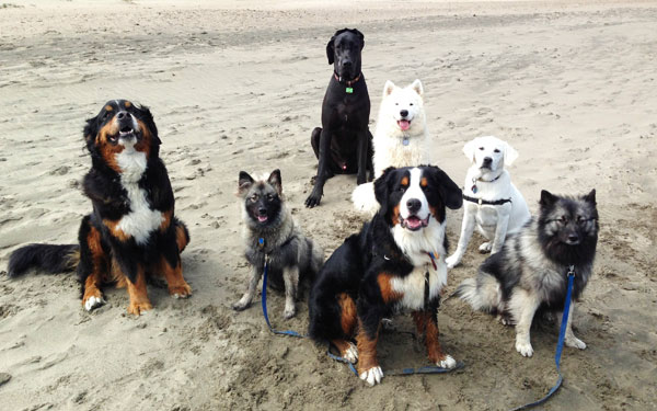 photo of dogEvolve dogs at beach