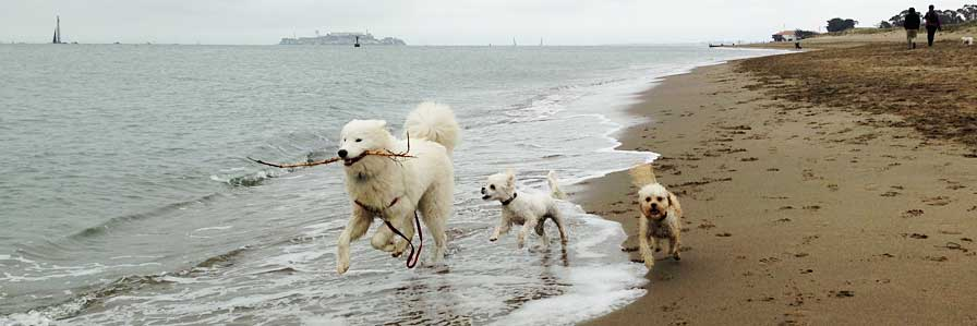 photo of DogEvolve white dogs at the beach