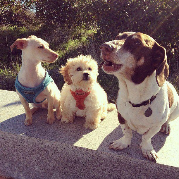 photos of small dogEvolve dogs