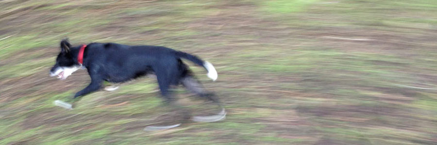 photo of dog running